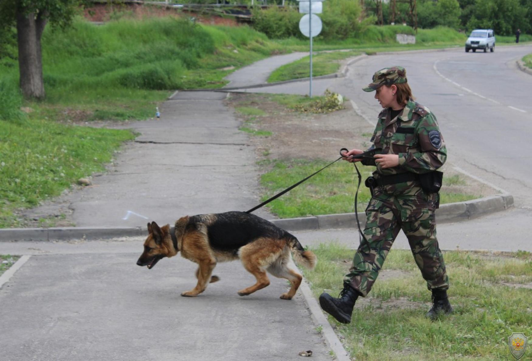 Применение служебно-разыскной собаки